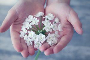 Fleurs blanches dans les mains