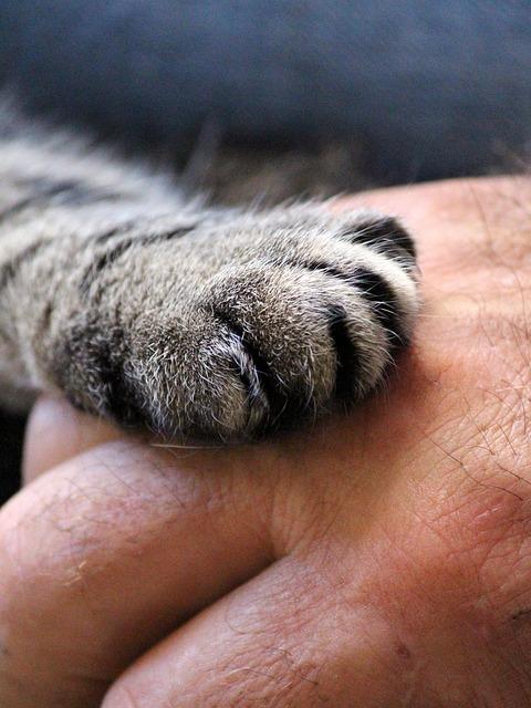 Pate de chat sur une main